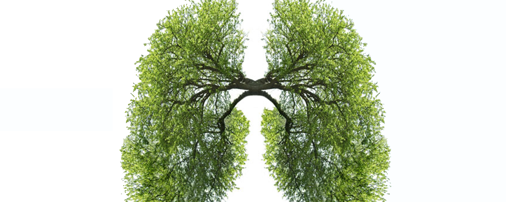 Image of tree branches shaped like lungs.